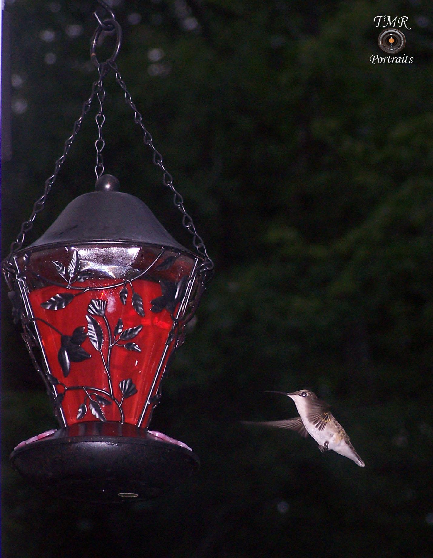 Humming Birdlogo